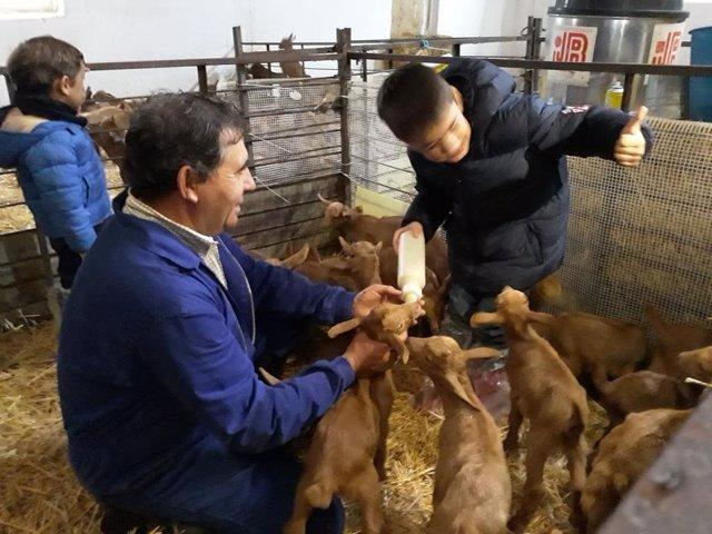Niño dando biberón a cabras málaga