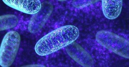 Desentrañan el misterio de cómo y cuándo se replica el ADN