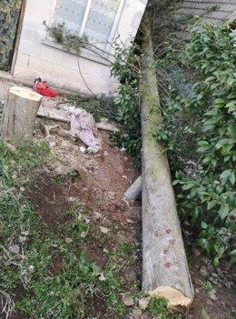 Un hombre grave tras caerle encima el árbol que estaba cortando