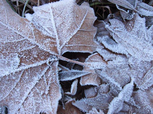 Heladas y temperaturas bajo cero