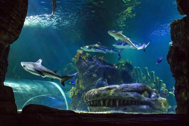 Tanque principal de Sea Life Benalmadena