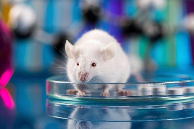 Ratón laboratorio ciencia