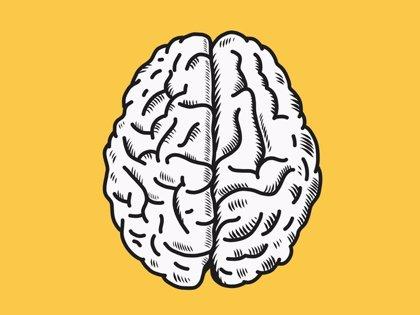 El cerebro también aprende 'hablando' consigo mismo