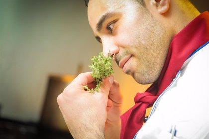 Descubren cómo funcionan los cilios olfativos para comunicarnos los olores