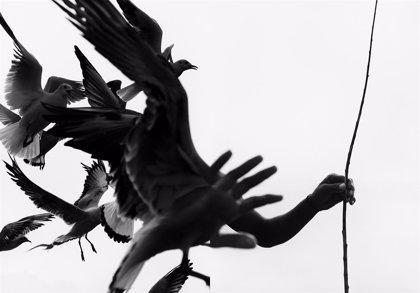 La cultura latinoamericana encabezará las primeras muestras de arte contemporáneo en Madrid este 2019