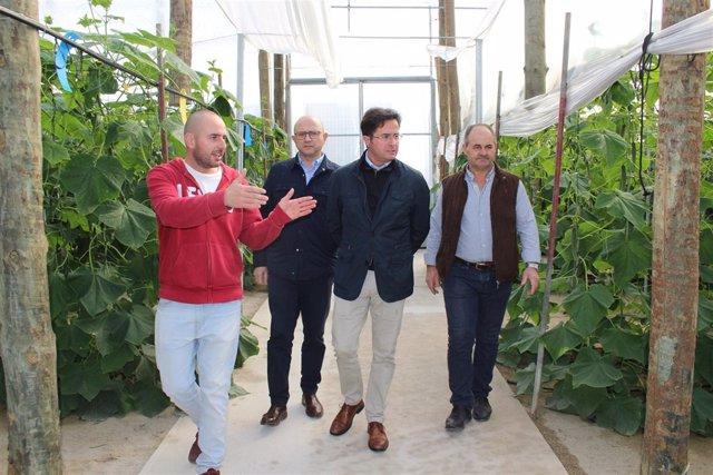 Góngora visita la plantación de pepino de un agricultor de El Ejido
