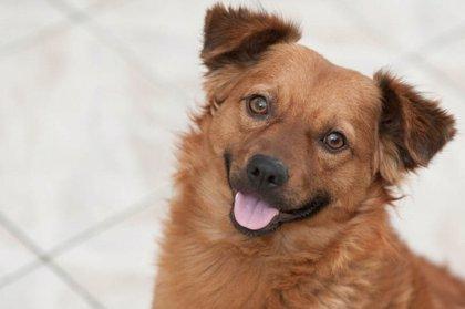 Un insecticida oral administrado a perros logra matar insectos vectores de leishmaniasis