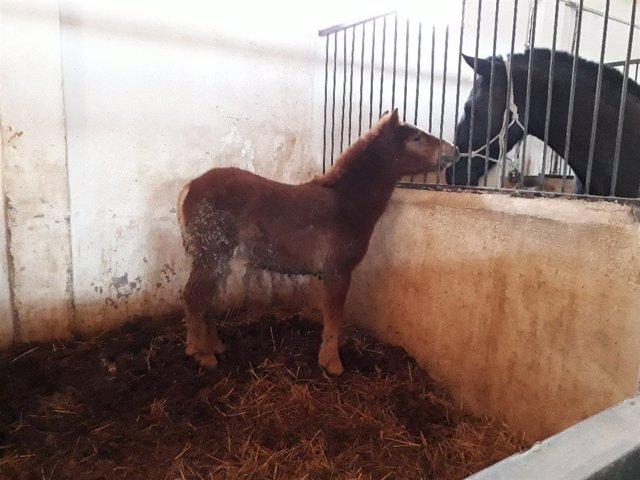 Un pony abandonado en las inmediaciones de Los Pilones