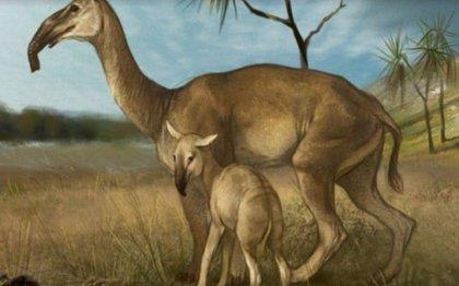 Hallan en Argentina el esqueleto de un mamífero extinguido hace 8.000 años