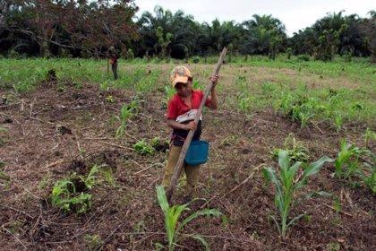 El auge de aceite de palma aviva la migración en Guatemala
