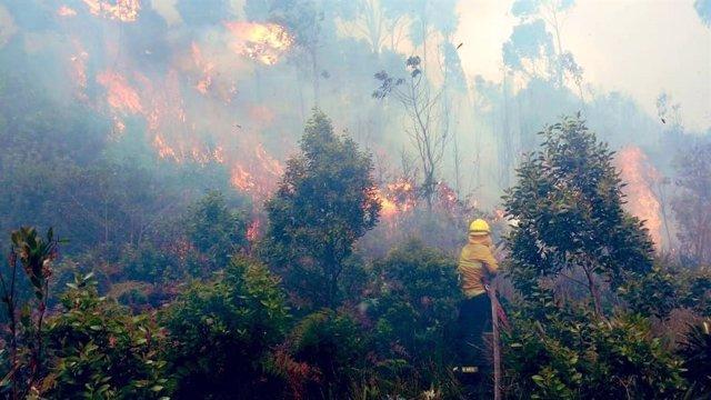 Continúan los incendios forestales en Bogotá