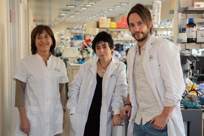 Descubren un nuevo mecanismo por el que la obesidad provoca resistencia a la insulina