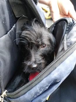 Perro hallado en la basura en Las Palmas de Gran Canaria