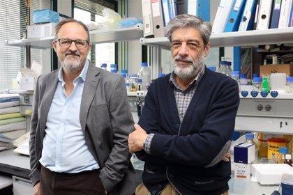 Investigadores de la UPO de Sevilla relacionan la deficiencia de Coenzima Q con una enfermedad similar al síndrome Leigh