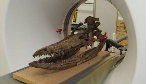 Cráneo  de ictiosaurio