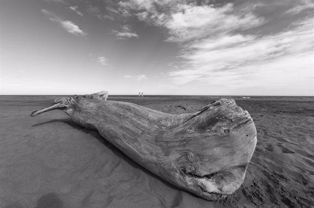 """Muestra de fotografías de Javier Belver """"Lo que deja el mar"""" en Bantierra"""