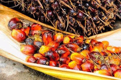La OMS dice que las tácticas de la industria del aceite de palma son similares a la del alcohol y tabaco