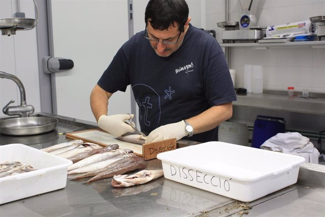 Crece la población de merluzas en Roses tras impulsar un plan de veda de pesca