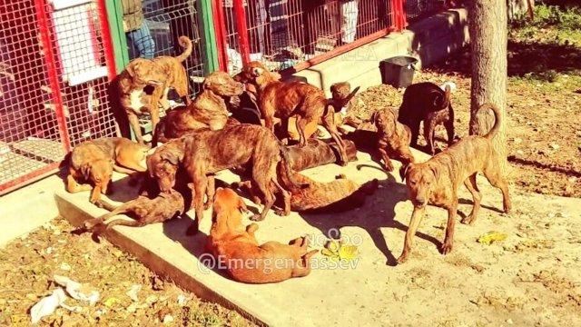 Perros abandonados en Sevilla