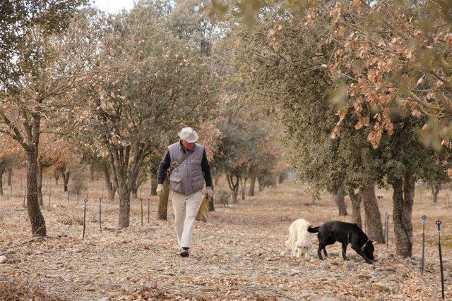 Un truficultor con sus perros
