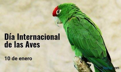 10 de enero: Día Internacional de las Aves, ¿por qué se celebra hoy?