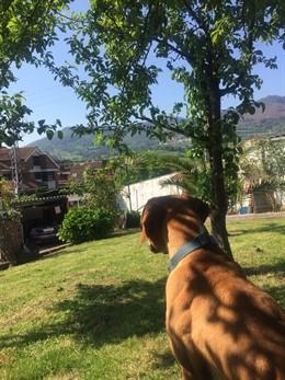 Perro, mascota, casas rurales que admiten animales, turismo verde