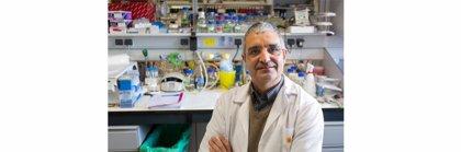 El doctor Xosé R. Bustelo, nuevo presidente de la Asociación Española de Investigación sobre el Cáncer