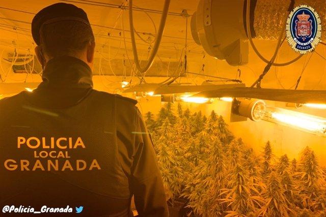 Zulo con marihuana en los bajos de un bloque de Granada
