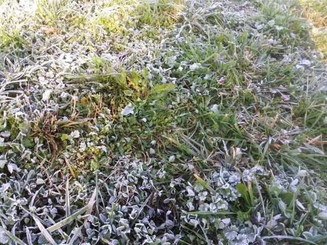 Frío, helada, hierba helada