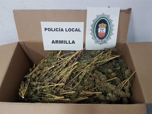 Ramas de cannabis sativa incautadas en un domicilio