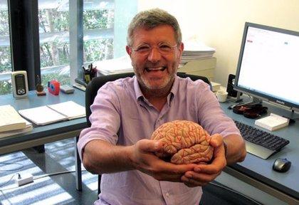 Descubren nuevos conocimientos sobre la arquitectura celular del cerebro humano