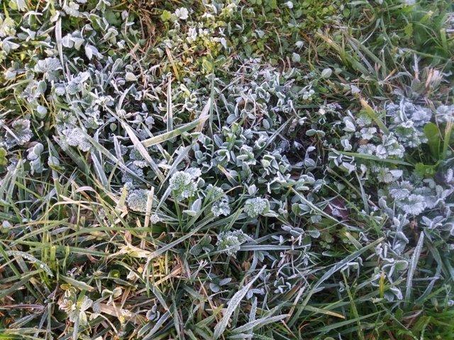 Frio, helada, hierba helada