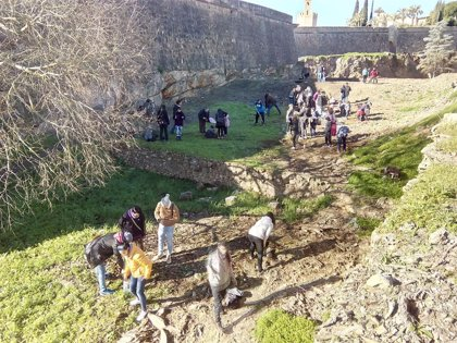 Piden la retirada de los árboles plantados por Ecologistas en Acción junto a la muralla de Badajoz