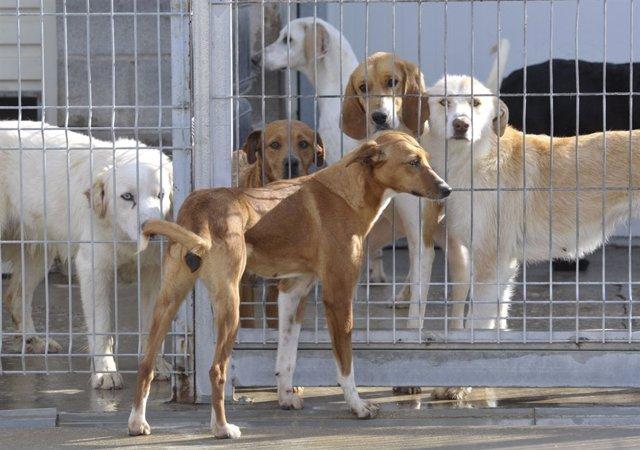 Centro de recogida de animales de la Diputación de Huesca