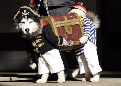 14 de enero: Día Mundial de Vestir a tu Mascota, ¿qué significado tiene esta efeméride?