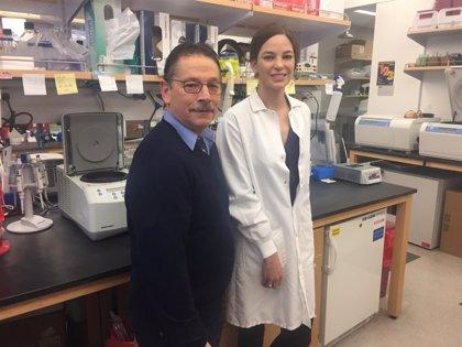 Nueva terapia génica para el tratamiento del síndrome IPEX