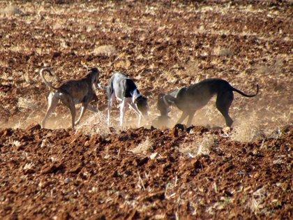 Reducir sanciones, recuperar calibres y permitir la espera nocturna, propuestas de PP a ley de caza