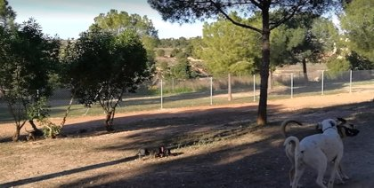 Paterna destina más de 3.000 m2 en Lloma Llarga a una zona de esparcimiento canino que incluye cuatro pipicanes