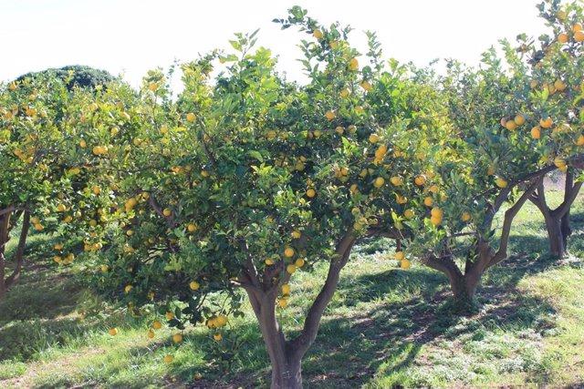 Cítricos, naranjas