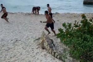 Un enorme caimán siembra el pánico en una de las playas más turísticas de Colombia y se viraliza el momento
