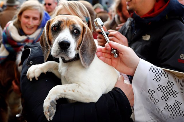 A dog is blessed by Belgian priest Philippe Goosse after a religious service for