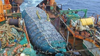 Protestas en Chile para exigir la aprobación de una ley que contempla la prohibición de la pesca de arrastre