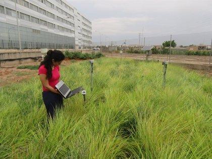 Una investigadora de la UPV recibe un premio internacional por sus erstudios para mejorar el cultivo de la chufa