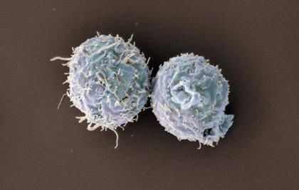 Científicos consiguen crear una fuente renovable de células T que combate el cáncer