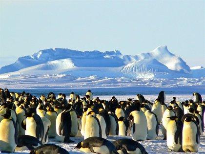 20 de enero: Día Mundial de los Pingüinos, ¿cuál es el origen de esta efeméride?