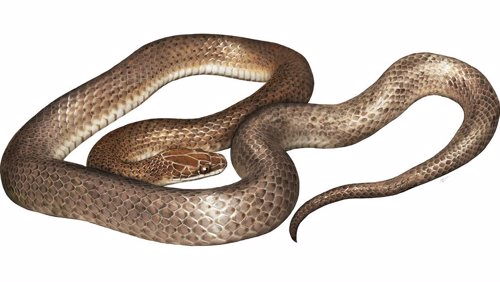 Nueva especie de serpiente