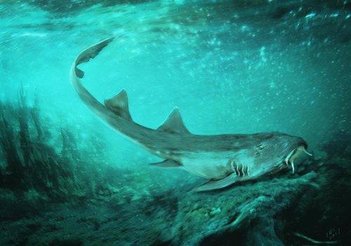Recreación del tiburón cuyos dientes han sido objeto de estudio