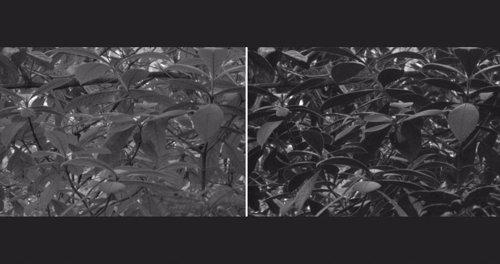 La imagen de la derecha fue tomada por la cámara especial
