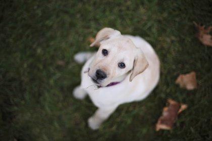 Quema con ácido la cara de un perro y lo deja ciego, en Mendoza, Argentina