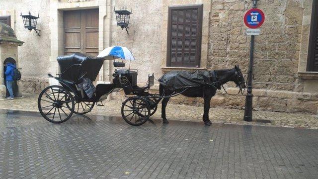 Un cavall de les galeres de Palma sota la pluja